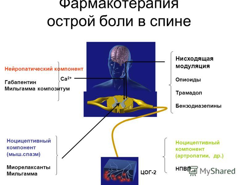 Фармакотерапия острой боли в спине Нисходящая модуляция Опиоиды Трамадол Бензодиазепины Нейропатический компонент Габапентин Мильгамма композитум Ca 2+ Ноцицептивный компонент (артропатии, др.) НПВП ЦОГ-2 Ноцицептивный компонент (мыш.спазм) Миорелакс