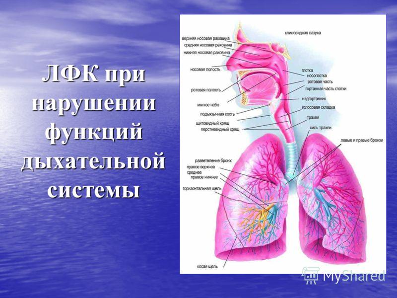 ЛФК при нарушении функций дыхательной системы