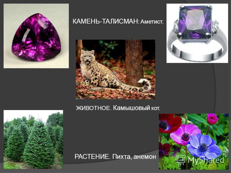КАМЕНЬ-ТАЛИСМАН : Аметист. РАСТЕНИЕ. Пихта, анемон ЖИВОТНОЕ. Камышовый кот.