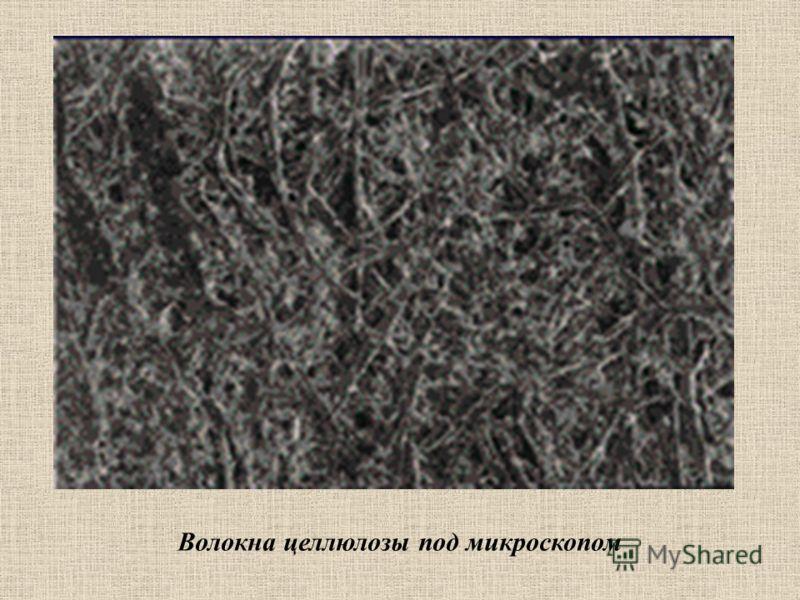 Волокна целлюлозы под микроскопом
