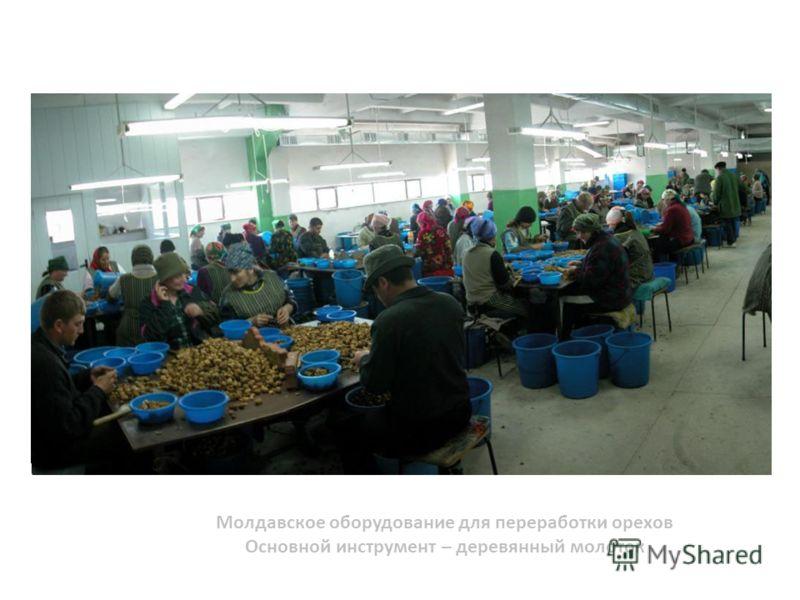 Молдавское оборудование для переработки орехов Основной инструмент – деревянный молоток