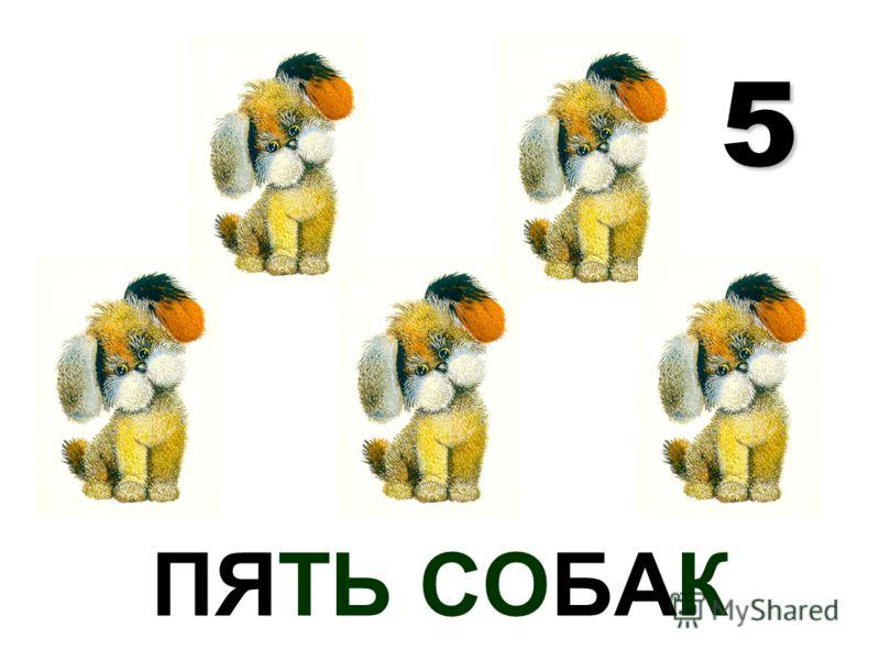 ПЯТЬ СОБАК 5