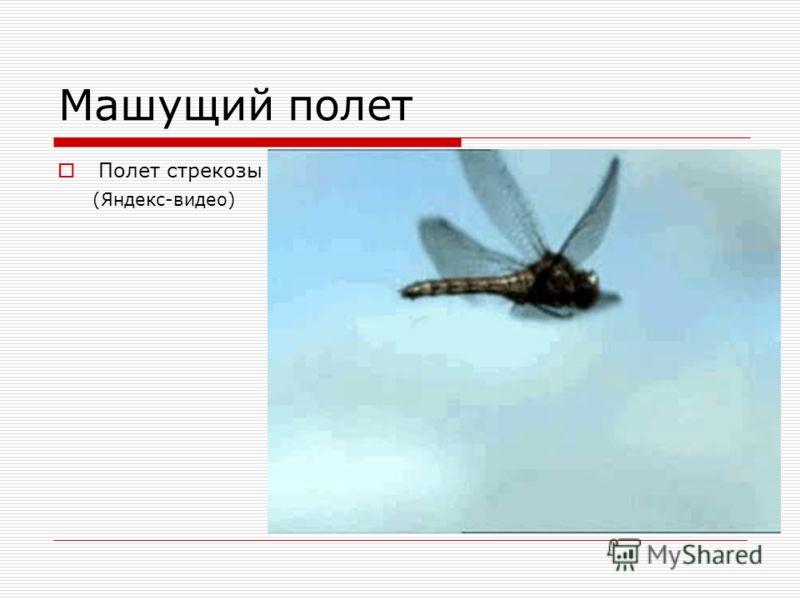 Машущий полет Полет стрекозы (Яндекс-видео)