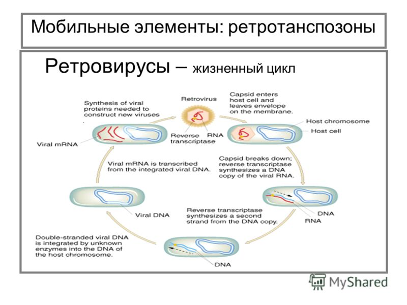 Ретровирус фото