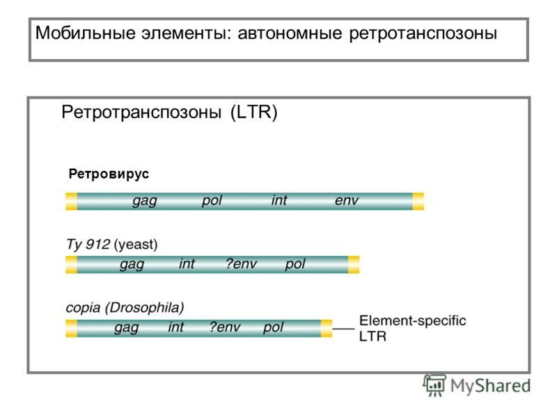 Мобильные элементы: автономные ретротанспозоны Ретротранспозоны (LTR) Ретровирус
