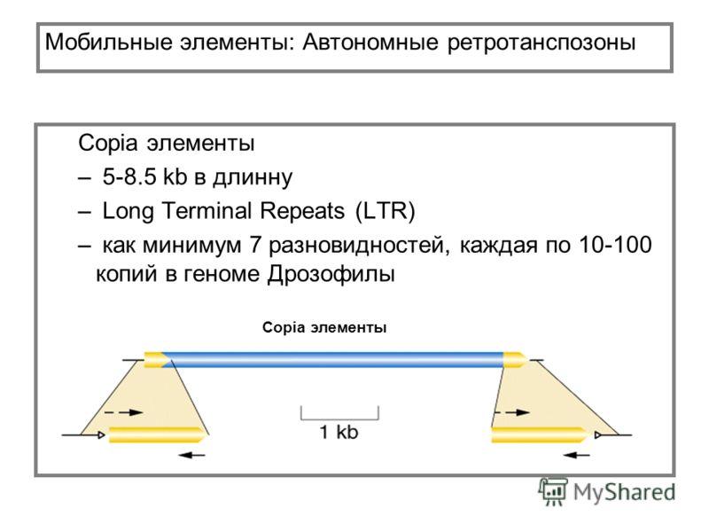 Мобильные элементы: Автономные ретротанспозоны Copia элементы – 5-8.5 kb в длинну – Long Terminal Repeats (LTR) – как минимум 7 разновидностей, каждая по 10-100 копий в геноме Дрозофилы Copia элементы