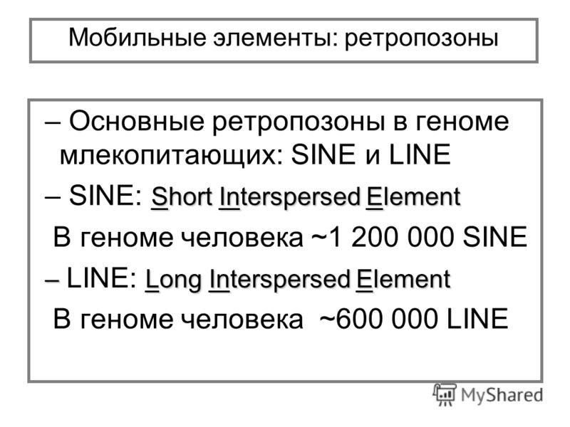 Мобильные элементы: ретропозоны – Основные ретропозоны в геноме млекопитающих: SINE и LINE Short Interspersed Element – SINE: Short Interspersed Element В геноме человека ~1 200 000 SINE – Long Interspersed Element – LINE: Long Interspersed Element В