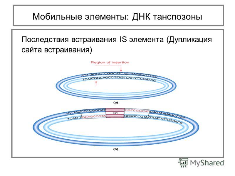 Последствия встраивания IS элемента (Дупликация сайта встраивания) Мобильные элементы: ДНК танспозоны