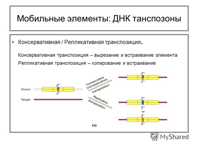 Консервативная / Репликативная транспозиция. Консервативная транспозиция – вырезание и встраивание элемента Репликативная транспозиция – копирование и встраивание Мобильные элементы: ДНК танспозоны