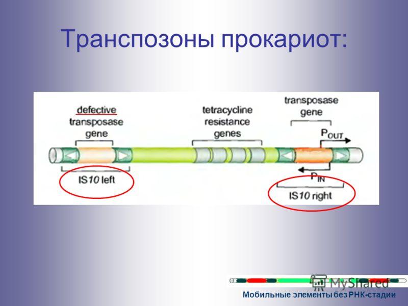 Мобильные элементы без РНК-стадии Транспозоны прокариот: