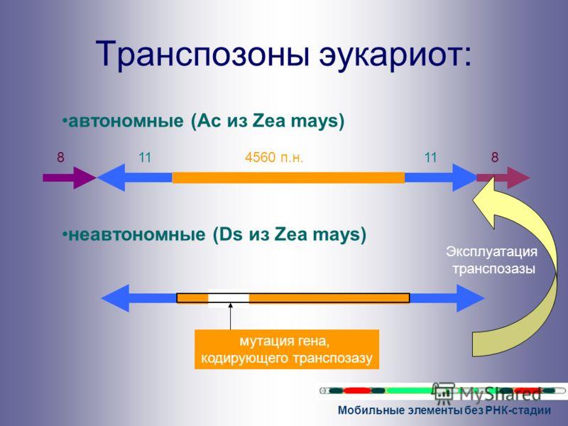Мобильные элементы без РНК-стадии Транспозоны эукариот: автономные (Ac из Zea mays) неавтономные (Ds из Zea mays) 4560 п.н.11 88 мутация гена, кодирующего транспозазу Эксплуатация транспозазы