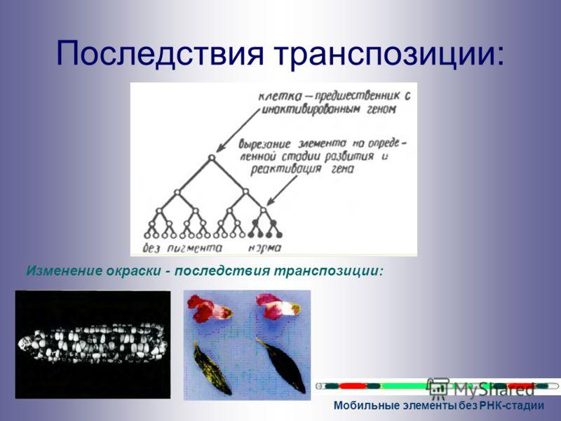 Мобильные элементы без РНК-стадии Последствия транспозиции: Изменение окраски - последствия транспозиции:
