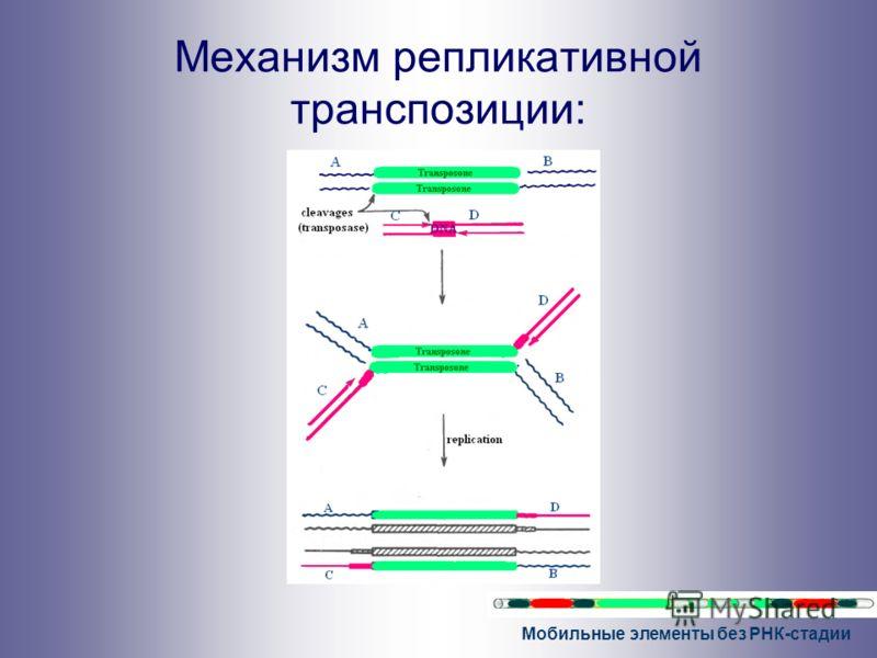 Мобильные элементы без РНК-стадии Механизм репликативной транспозиции: