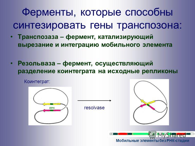 Мобильные элементы без РНК-стадии Ферменты, которые способны синтезировать гены транспозона: Транспозаза – фермент, катализирующий вырезание и интеграцию мобильного элемента Резольваза – фермент, осуществляющий разделение коинтеграта на исходные репл