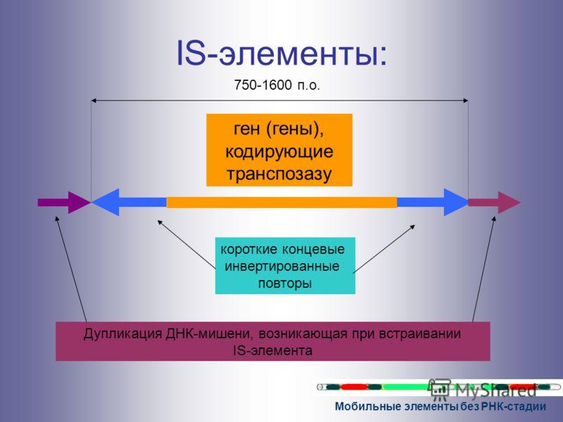 Мобильные элементы без РНК-стадии IS-элементы: ген (гены), кодирующие транспозазу короткие концевые инвертированные повторы Дупликация ДНК-мишени, возникающая при встраивании IS-элемента 750-1600 п.о.