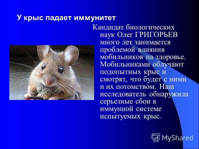 У крыс падает иммунитет Кандидат биологических наук Олег ГРИГОРЬЕВ много лет занимается проблемой влияния мобильников на здоровье. Мобильниками облучают подопытных крыс и смотрят, что будет с ними и их потомством. Наш исследователь обнаружила серьезн