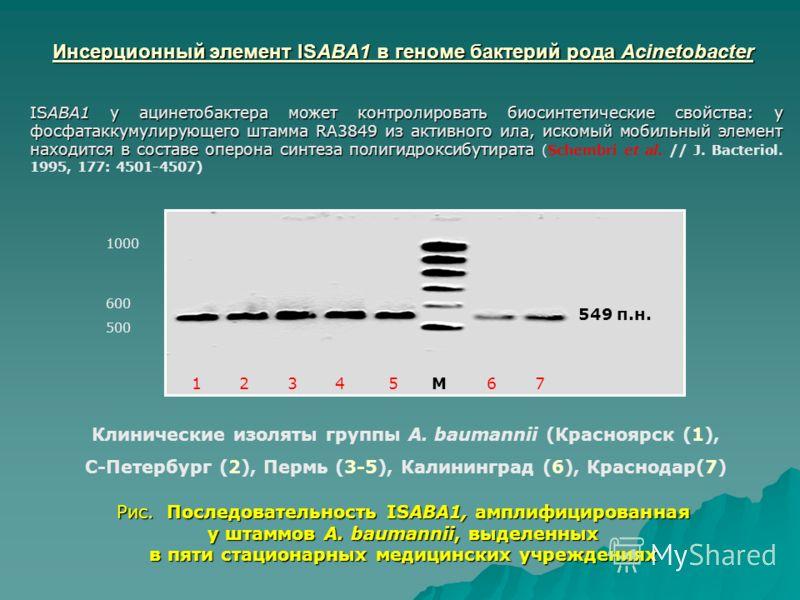 Инсерционный элемент ISABA1 в геноме бактерий рода Acinetobacter Инсерционный элемент ISABA1 в геноме бактерий рода Acinetobacter Рис. Последовательность ISABA1, амплифицированная у штаммов A. baumannii, выделенных в пяти стационарных медицинских учр