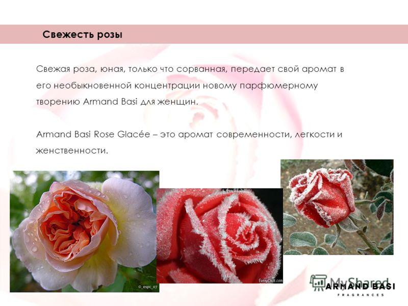 Свежая роза, юная, только что сорванная, передает свой аромат в его необыкновенной концентрации новому парфюмерному творению Armand Basi для женщин. Armand Basi Rose Glacée – это аромат современности, легкости и женственности. Свежесть розы