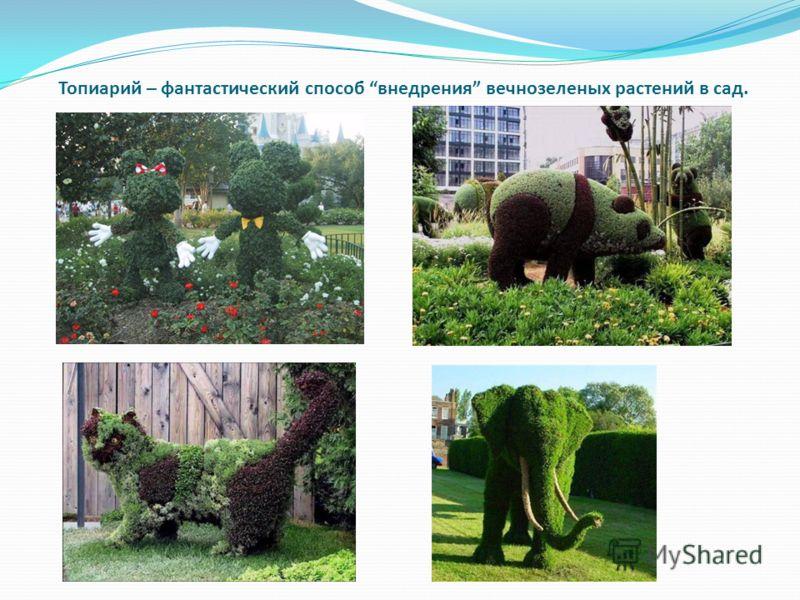 Топиарий – фантастический способ внедрения вечнозеленых растений в сад.
