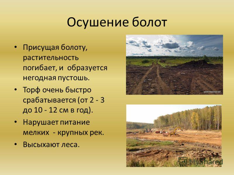 Осушение болот Присущая болоту, растительность погибает, и образуется негодная пустошь. Торф очень быстро срабатывается (от 2 - 3 до 10 - 12 см в год). Нарушает питание мелких - крупных рек. Высыхают леса.