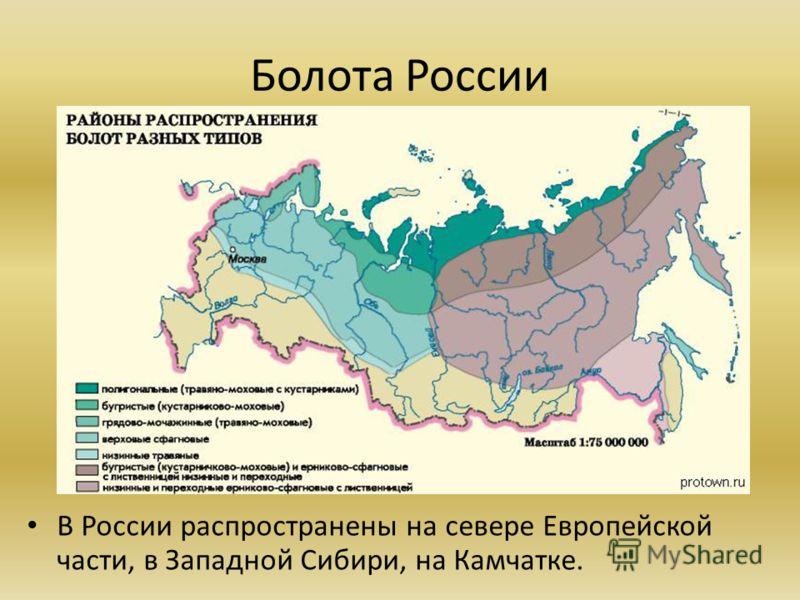 Болота России В России распространены на севере Европейской части, в Западной Сибири, на Камчатке.