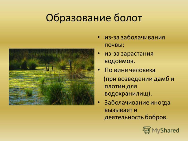 Образование болот из-за заболачивания почвы; из-за зарастания водоёмов. По вине человека (при возведении дамб и плотин для водохранилищ). Заболачивание иногда вызывает и деятельность бобров.