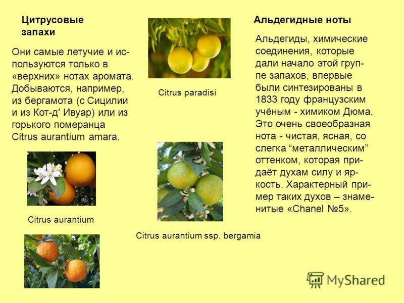 Цитрусовые запахи Альдегидные ноты Они самые летучие и ис- пользуются только в «верхних» нотах аромата. Добываются, например, из бергамота (с Сицилии и из Кот-д Ивуар) или из горького померанца Citrus aurantium amara. Альдегиды, химические соединения