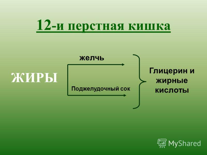 12 -и перстная кишка ЖИРЫ желчь Поджелудочный сок Глицерин и жирные кислоты