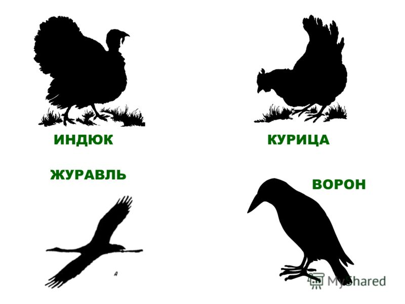 ИНДЮК ЖУРАВЛЬ КУРИЦА ВОРОН