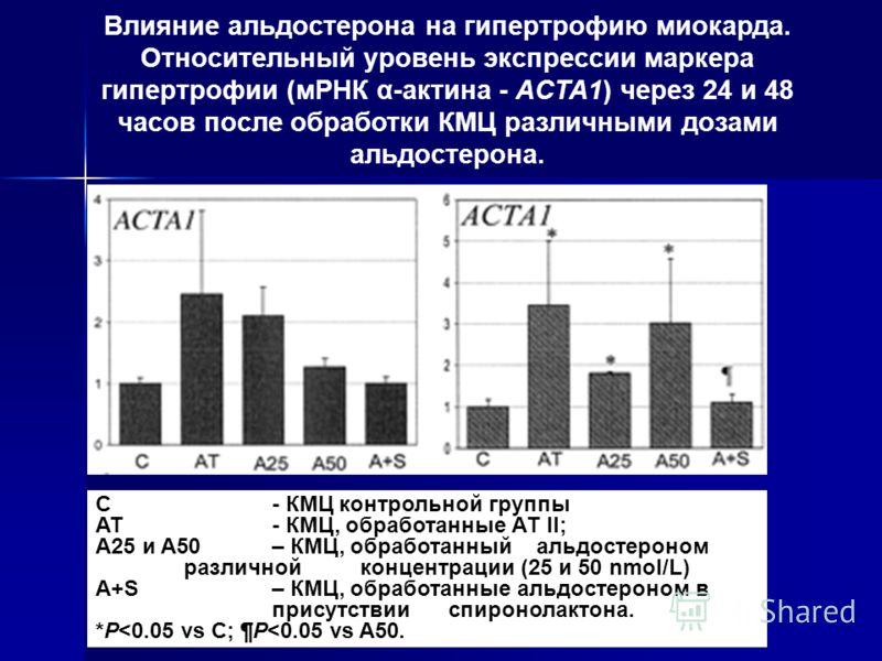 C - КМЦ контрольной группы AT - КМЦ, обработанные АТ II; A25 и A50 – КМЦ, обработанный альдостероном различной концентрации (25 и 50 nmol/L) A+S – КМЦ, обработанные альдостероном в присутствии спиронолактона. *P