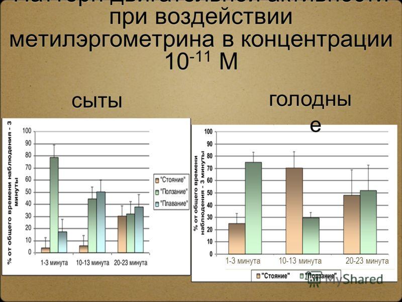 Паттерн двигательной активности при воздействии метилэргометрина в концентрации 10 -11 М сыты е 1-3 минута 10-13 минута 20-23 минута голодны е
