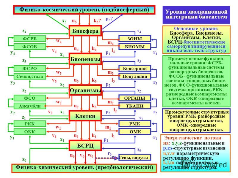 Уровни эволюционной интеграции биосистем Основные уровни: Биосфера, Биоценозы, Организмы, Клетки, БСРЦ- биосинтетические саморедуплицирующиеся циклы золь-гель структур Биосфера Физико-космический уровень (надбиосферный) Биоценозы Организмы Клетки БСР