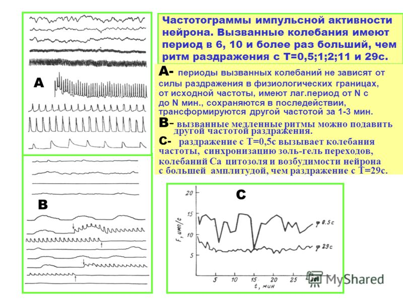 Частотограммы импульсной активности нейрона. Вызванные колебания имеют период в 6, 10 и более раз больший, чем ритм раздражения с Т=0,5;1;2;11 и 29с. А- периоды вызванных колебаний не зависят от силы раздражения в физиологических границах, от исходно