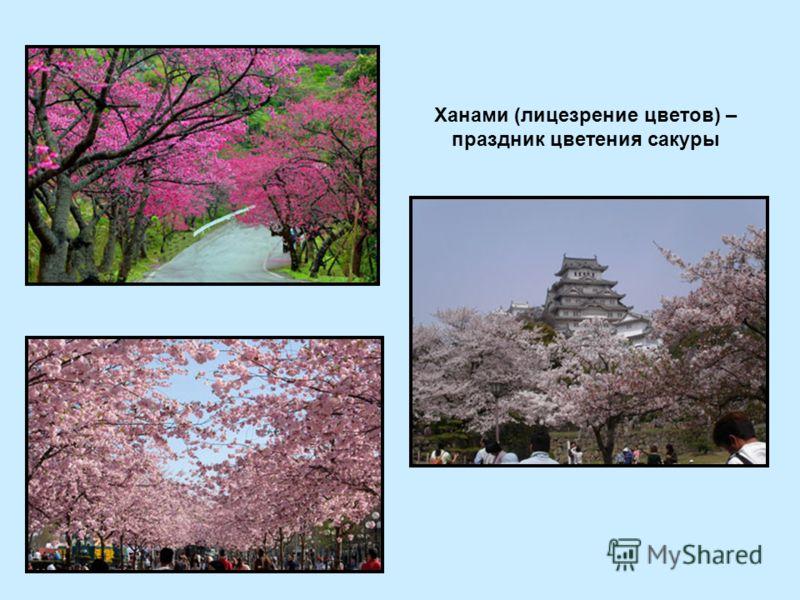 Ханами (лицезрение цветов) – праздник цветения сакуры