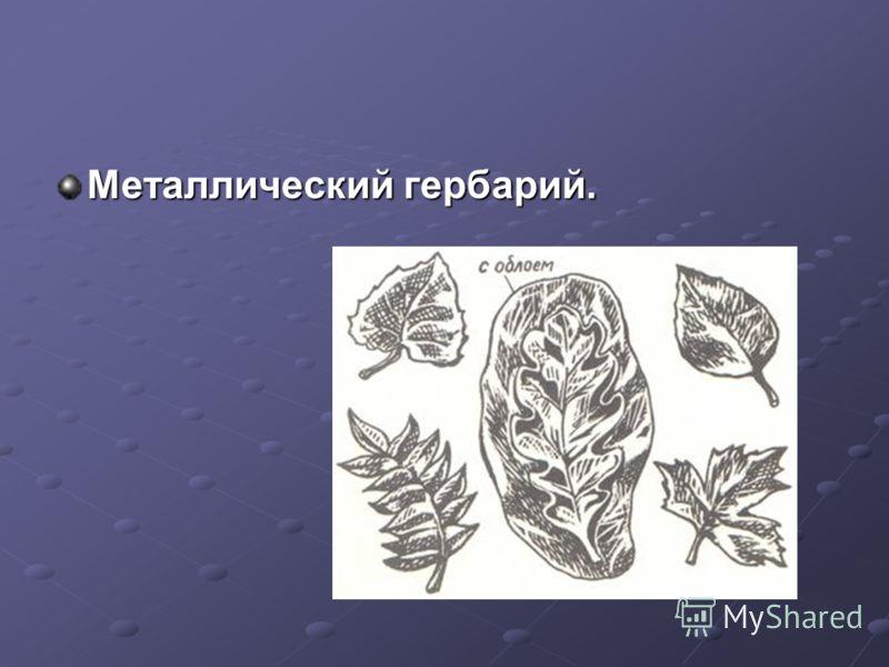 Металлический гербарий.