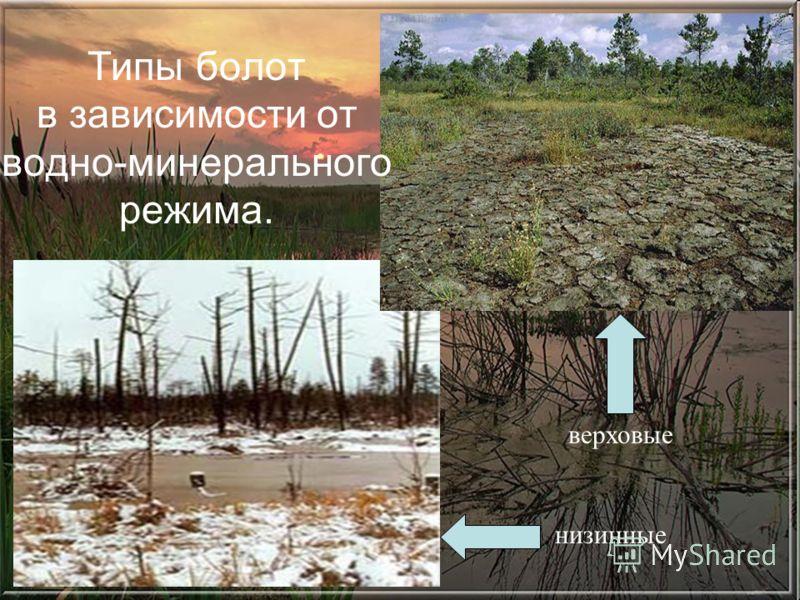 низинные верховые Типы болот в зависимости от водно-минерального режима.