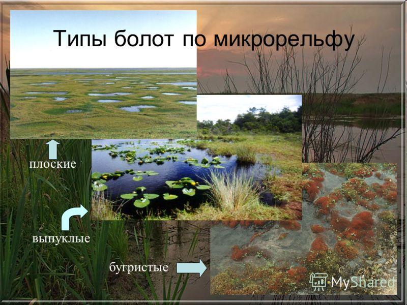 плоские выпуклые Типы болот по микрорельфу бугристые