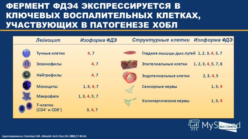 Лейкоцит Изоформа ФДЭ Структурные клетки Изоформа ФДЭ Тучные клетки 4, 7 Эозинофилы 4, 7 Нейтрофилы 4, 7 Моноциты 1, 3, 4, 7 Макрофаги 1, 3, 4, 5, 7 Т-клетки (CD4 + и CD8 + ) 3, 4, 7 Гладкие мышцы дых.путей 1, 2, 3, 4, 5, 7 Эпителиальные клетки 1, 2,