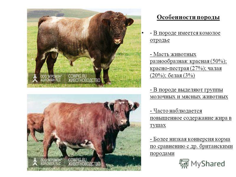 Особенности породы - В породе имеется комолое отродье - Масть животных разнообразная: красная (50%); красно-пестрая (27%); чалая (20%); белая (3%) - В породе выделяют группы молочных и мясных животных - Часто наблюдается повышенное содержание жира в