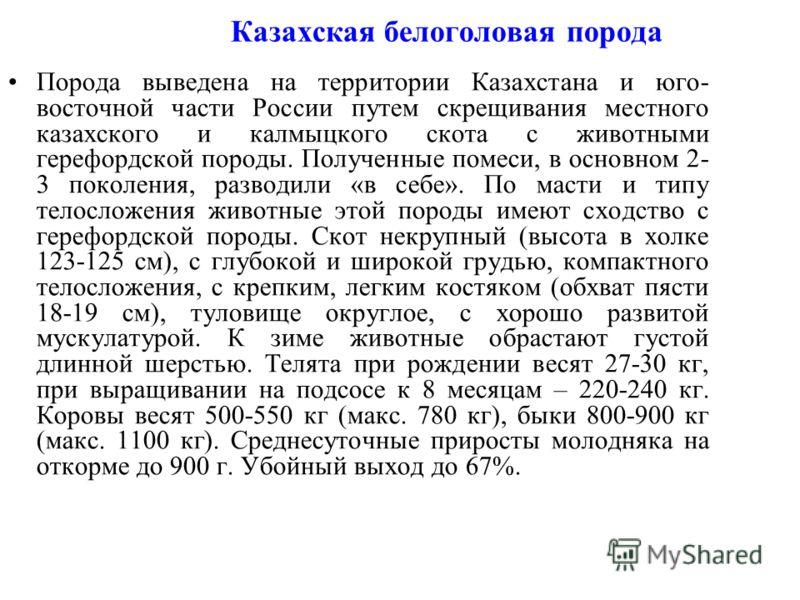 Казахская белоголовая порода Порода выведена на территории Казахстана и юго- восточной части России путем скрещивания местного казахского и калмыцкого скота с животными герефордской породы. Полученные помеси, в основном 2- 3 поколения, разводили «в с