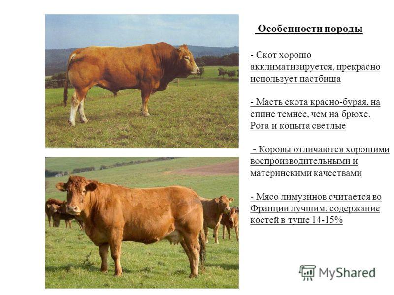 Особенности породы - Скот хорошо акклиматизируется, прекрасно использует пастбища - Масть скота красно-бурая, на спине темнее, чем на брюхе. Рога и копыта светлые - Коровы отличаются хорошими воспроизводительными и материнскими качествами - Мясо лиму