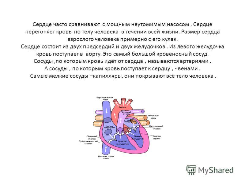 Сердце часто сравнивают с мощным неутомимым насосом. Сердце перегоняет кровь по телу человека в течении всей жизни. Размер сердца взрослого человека примерно с его кулак. Сердце состоит из двух предсердий и двух желудочков. Из левого желудочка кровь