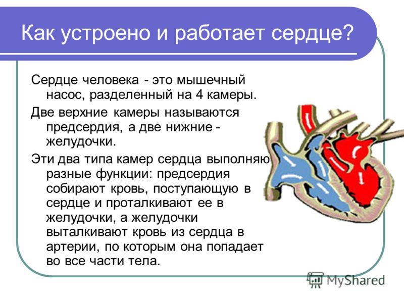 Как устроено и работает сердце? Сердце человека - это мышечный насос, разделенный на 4 камеры. Две верхние камеры называются предсердия, а две нижние - желудочки. Эти два типа камер сердца выполняют разные функции: предсердия собирают кровь, поступаю