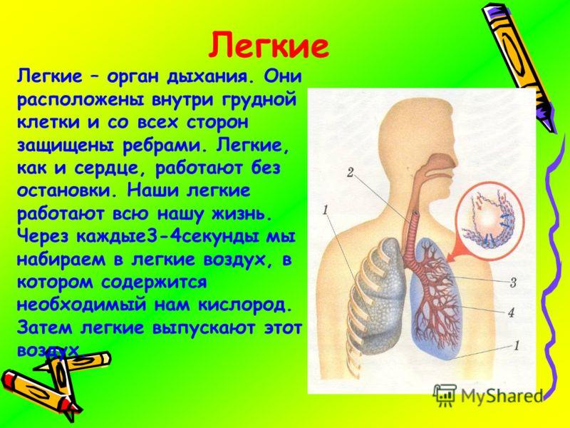 Легкие Легкие – орган дыхания. Они расположены внутри грудной клетки и со всех сторон защищены ребрами. Легкие, как и сердце, работают без остановки. Наши легкие работают всю нашу жизнь. Через каждые3-4секунды мы набираем в легкие воздух, в котором с