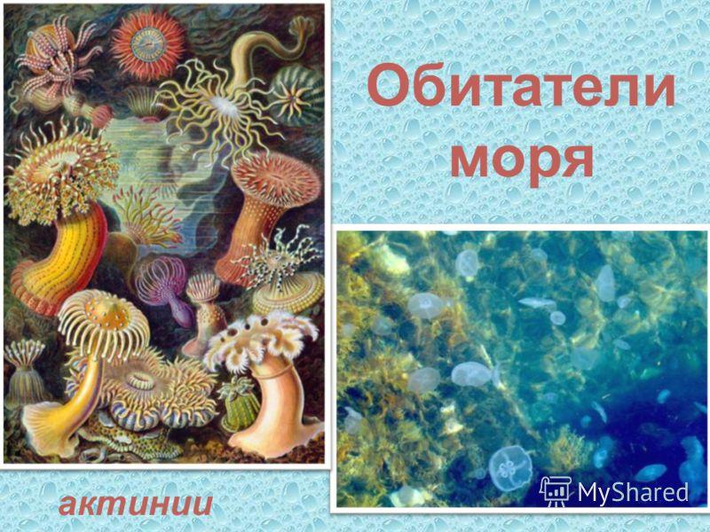 Обитатели моря актинии