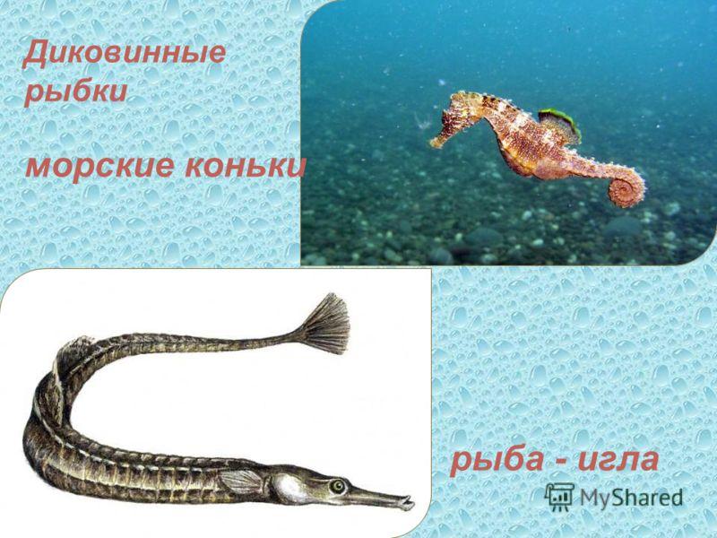 Диковинные рыбки морские коньки рыба - игла