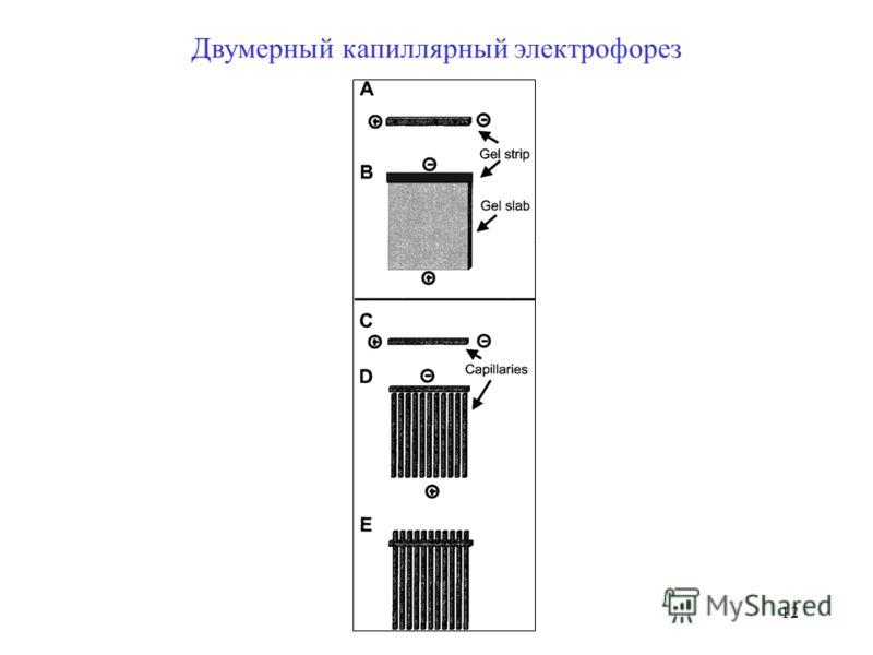 12 Двумерный капиллярный электрофорез