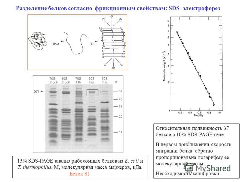 7 Разделение белков согласно фрикционным свойствам: SDS электрофорез Относительная подвижность 37 белков в 10% SDS-PAGE геле. В первом приближении скорость миграции белка обратно пропорциональна логарифму ее молекулярной массы. Необходимость калибров