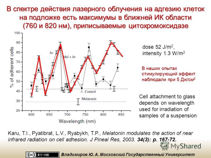 Правда ли, что действие NO на дыхание было обусловлено блокированием цитохромоксидазы? Control – not irradiated sample of normal mitochondria 100 55 78 55 59 0 20 40 60 80 100 120 * * * * Initial NO 442 nm + NO + NO + light 532 nm 650 nm Активность ц