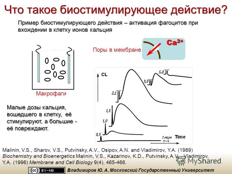 Основное положение биостимулирующего действияживые клетки Все известные нам факты биостимулирующего действия лазерного изучения на живые клетки, ткани и организмы являются следствием одной из двух основных первичных фотохимических реакций: 1)фотодина
